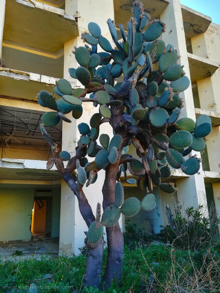 Figuier de barbarie, Jerma Palace Hotel, malte, Jerma Palace Hotel, malte