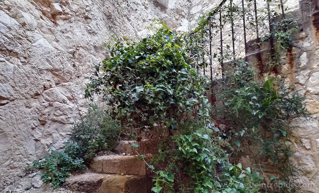 Les escaliers sauvages du fort de Ratonneau