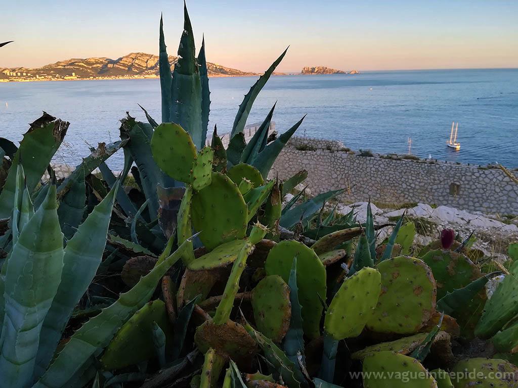 Figuiers de barbarie et agaves du Frioul, des plantes envahissantes